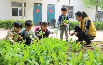 幼儿园孩子们种植蔬菜的过程,请点击:http